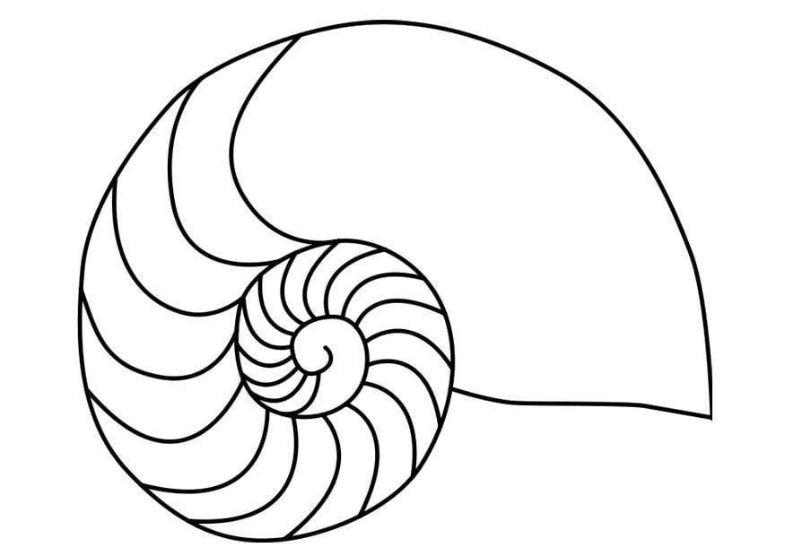Disegno da colorare mollusco nautilus cat 27187 for Disegni marini da colorare