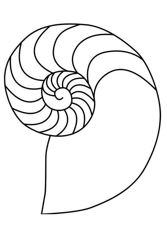 Disegno Da Colorare Mollusco Nautilus Cat 27187