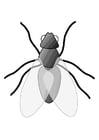 Disegno da colorare mosca