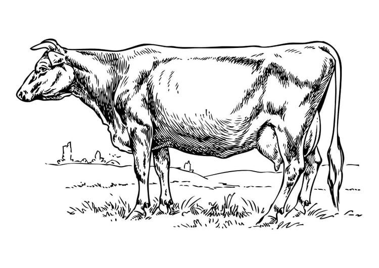 Disegno Da Colorare Mucca Disegni Da Colorare E Stampare Gratis Imm 30402