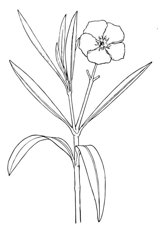 Disegno da colorare oleandro fiore cat 11711 for Disegno vaso da colorare