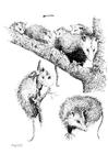 Disegno da colorare opossum