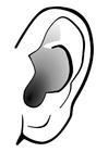 Disegno da colorare orecchio - silenzio