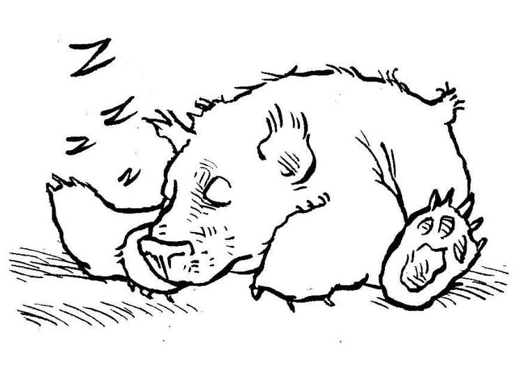 Disegno Da Colorare Orso Che Dorme Cat 7580