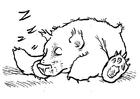 Disegno da colorare orso che dorme