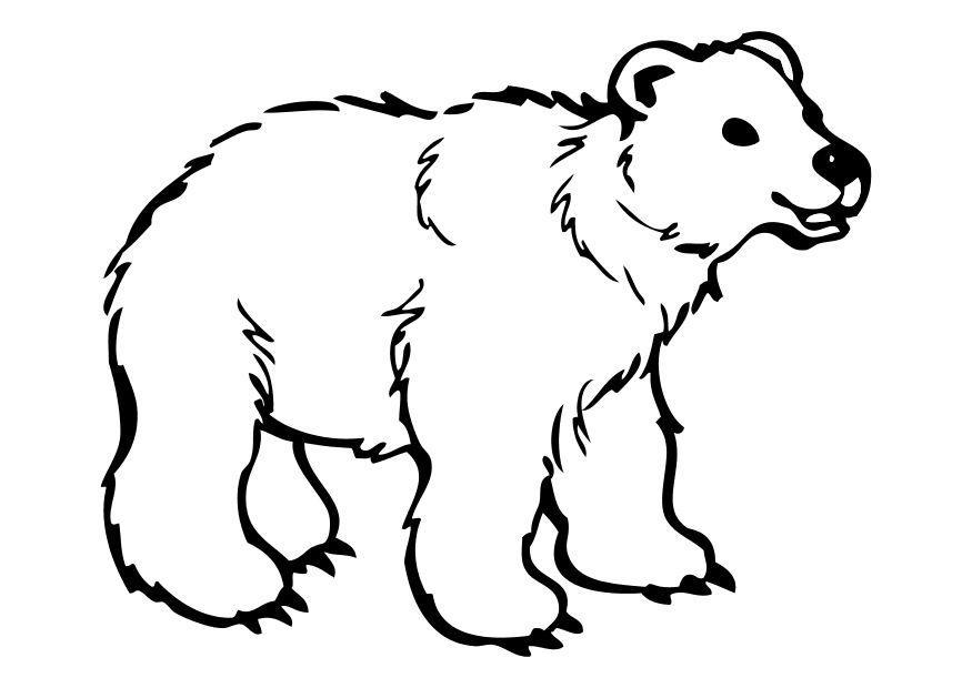 Disegno da colorare orso cat 10262 - Immagini di orsi da colorare in ...