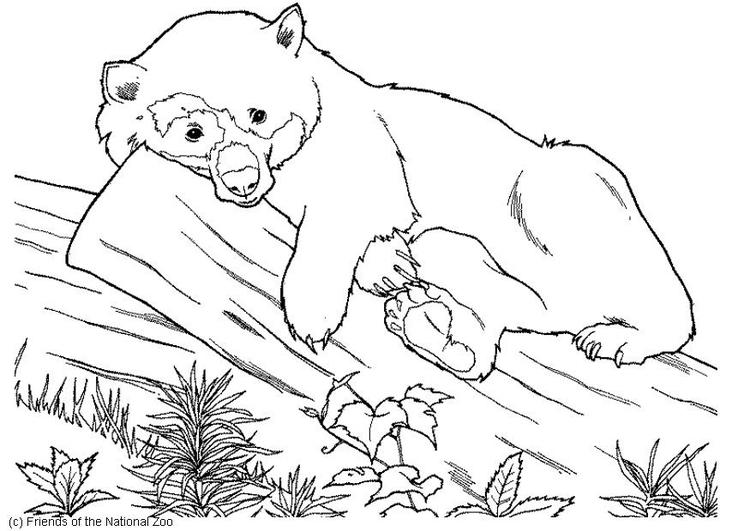 Disegno Da Colorare Orso Cat 5982