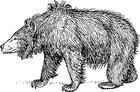 Disegno da colorare orso labiato