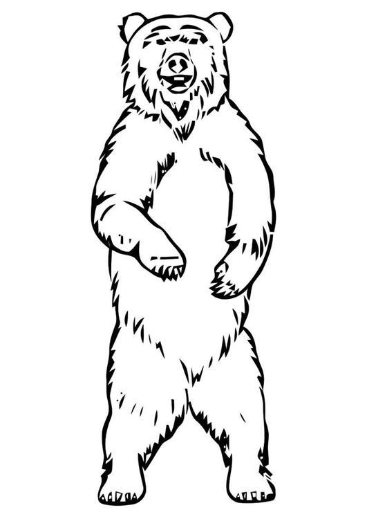 Disegno Da Colorare Orso Cat 19400