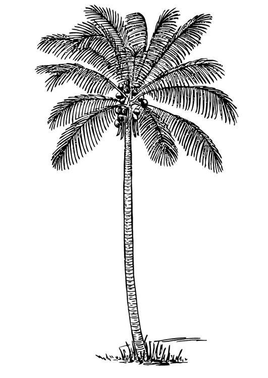 Disegno da colorare palma di cocco cat 13356 - Palma di cocco ...