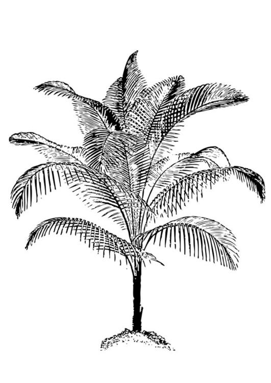 Disegno Da Colorare Palma Cat 17401