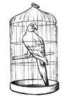 Disegno da colorare pappagallo in gabbia