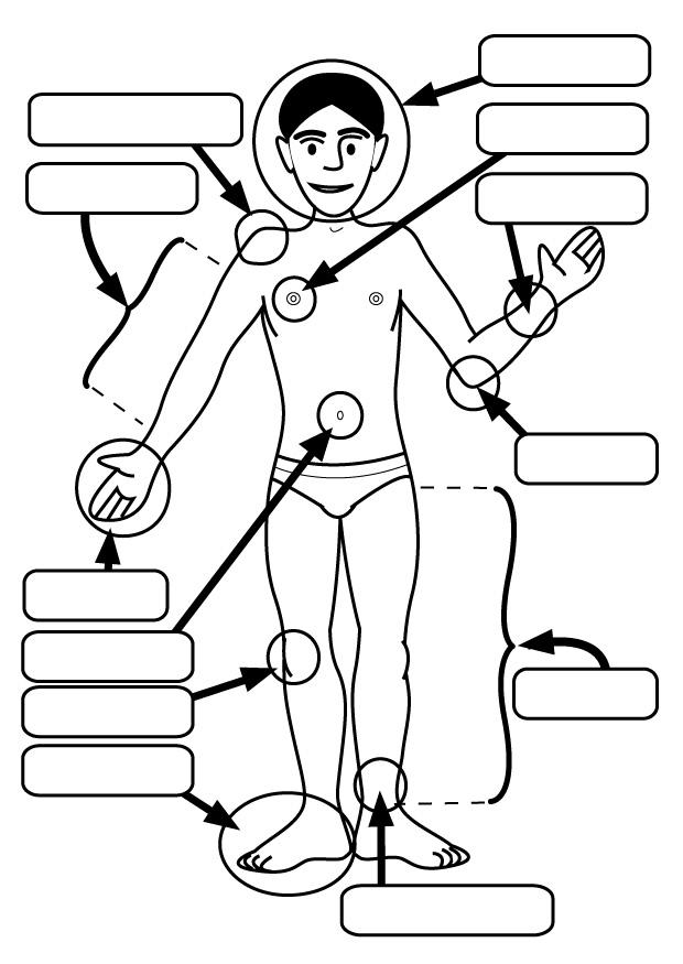 Human Body Parts Coloring Pages For Kids Special Offers
