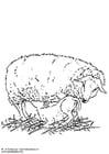 Disegno da colorare pecora con agnello