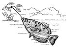 Disegno da colorare pesce arciere