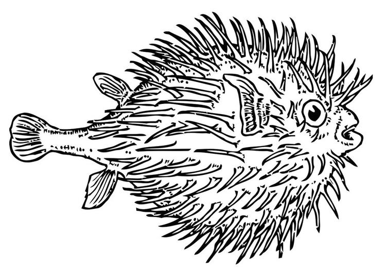 Disegno da colorare pesce palla cat 19623 for Pesce palla disegno