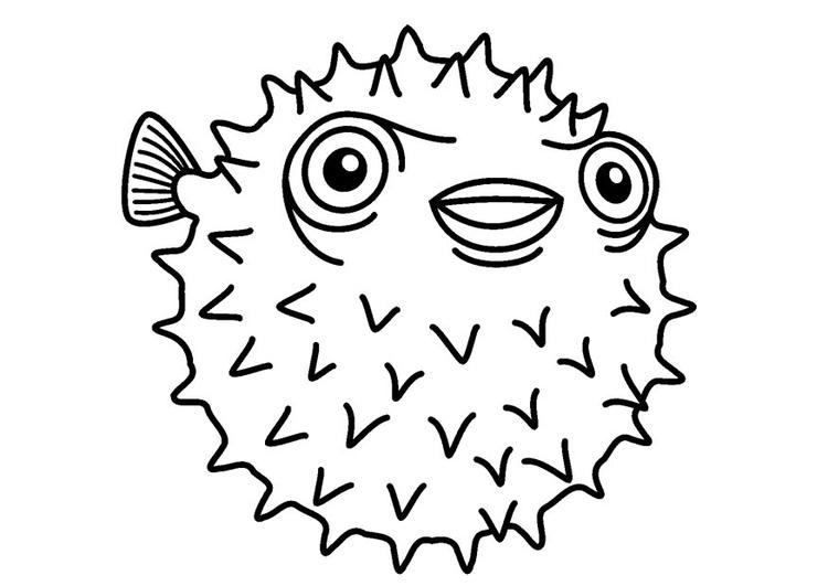 disegno da colorare pesce palla cat 23083
