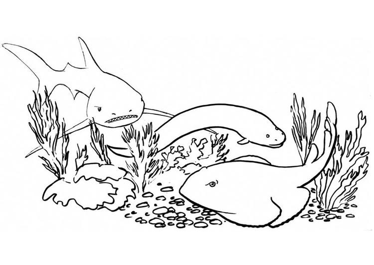 Disegno da colorare pesci e squali cat 8915 for Fondali marini da colorare