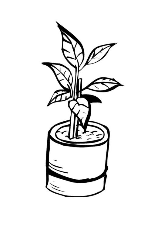 Disegno da colorare pianta da interno cat 9647 for Disegno vaso da colorare