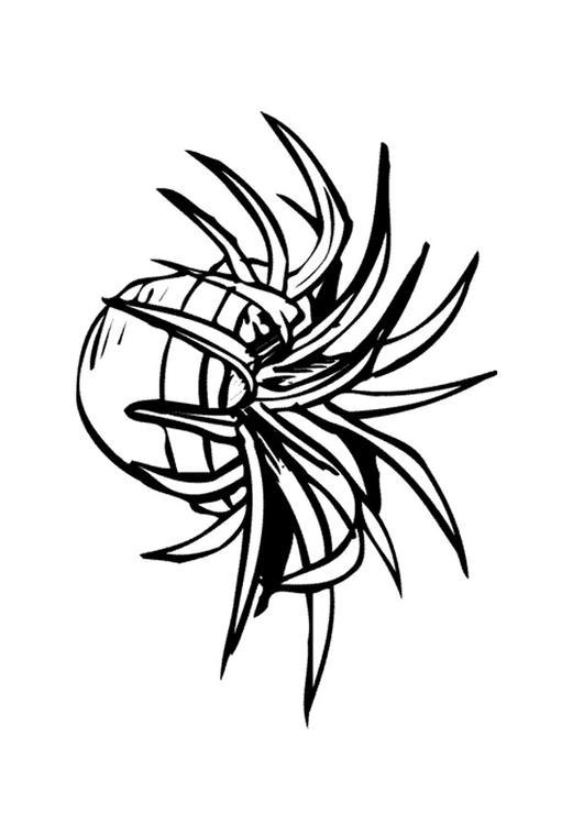 Disegno Da Colorare Pianta Da Interno Cat 9646