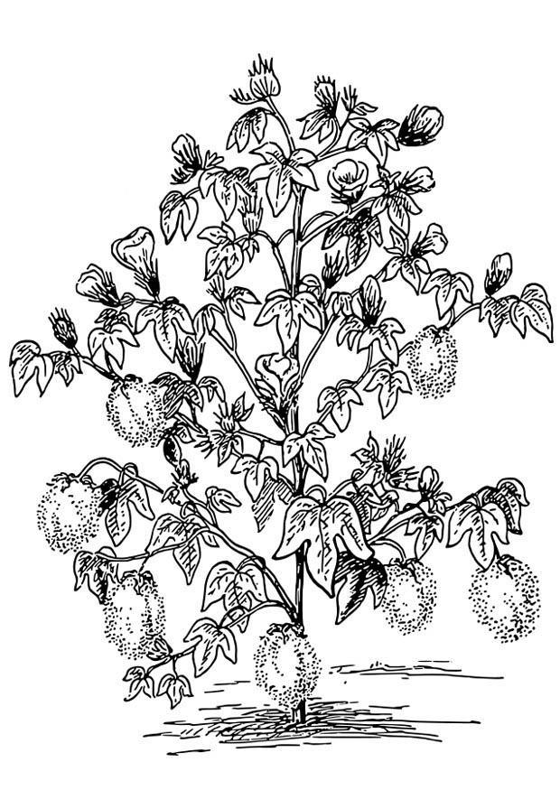 Disegno da colorare pianta del cotone cat 18650 for Disegno giardino da colorare