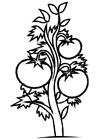 Disegno da colorare pianta di pomodori