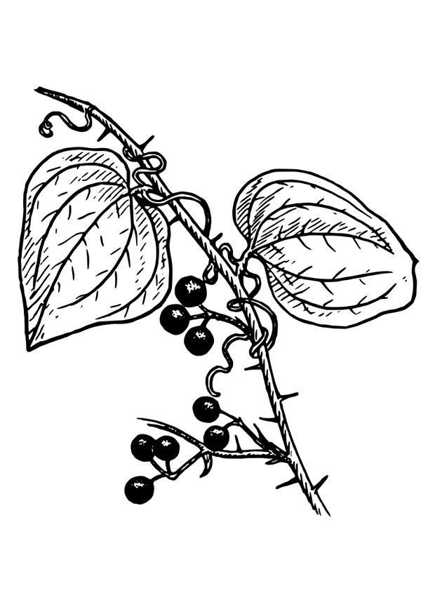 Disegno da colorare pianta - Disegni Da Colorare E ...