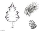 Disegno da colorare pino