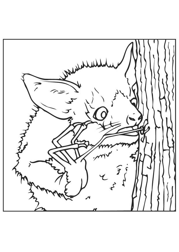 Disegno da colorare pipistrello cerca insetti cat 9445 - Immagini pipistrello da stampare ...