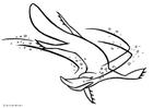 Disegno da colorare Platypus