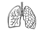 Disegno da colorare polmoni
