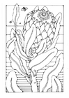 Disegno da colorare protea