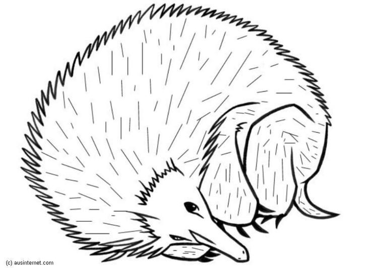 Disegno Da Colorare Riccio Cat 5603