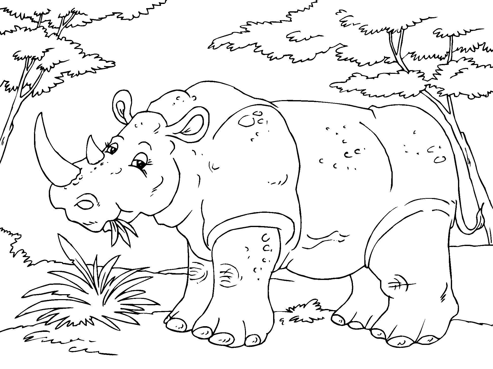 Kleurplaten Dieren In De Zoo Disegno Da Colorare Rinoceronte Cat 23016 Images