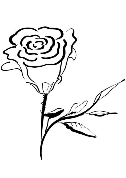 Disegno da colorare rosa cat 21275 - Immagini da colorare di rose ...