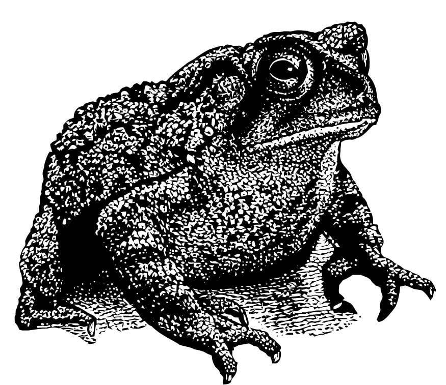 Disegno da colorare rospo cat 15725 - Dessin d un crapaud ...