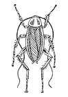 Disegno da colorare scarafaggio