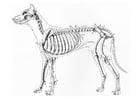 Disegno da colorare scheletro di cane