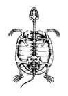 Disegno da colorare scheletro di tartaruga