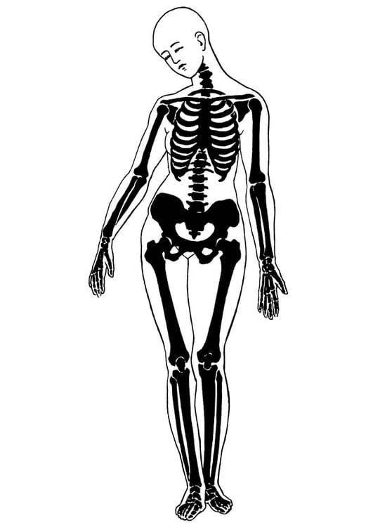 Disegno da colorare scheletro cat 18677 - Scheletro foglio da colorare ...