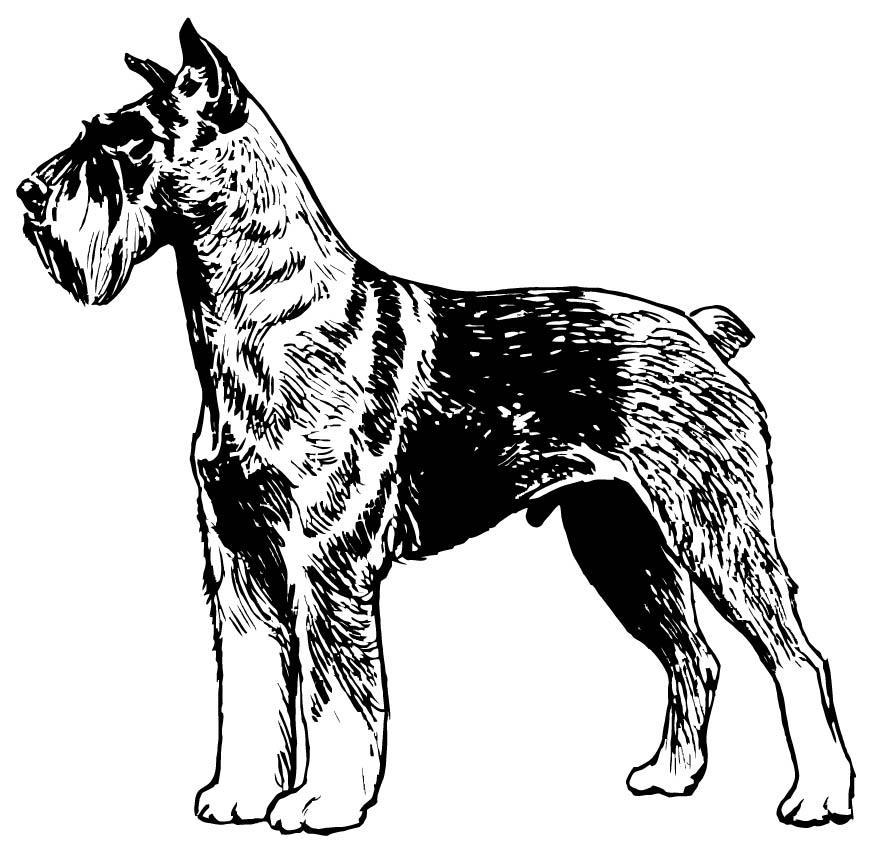 Disegno Da Colorare Schnauzer Cat 15705