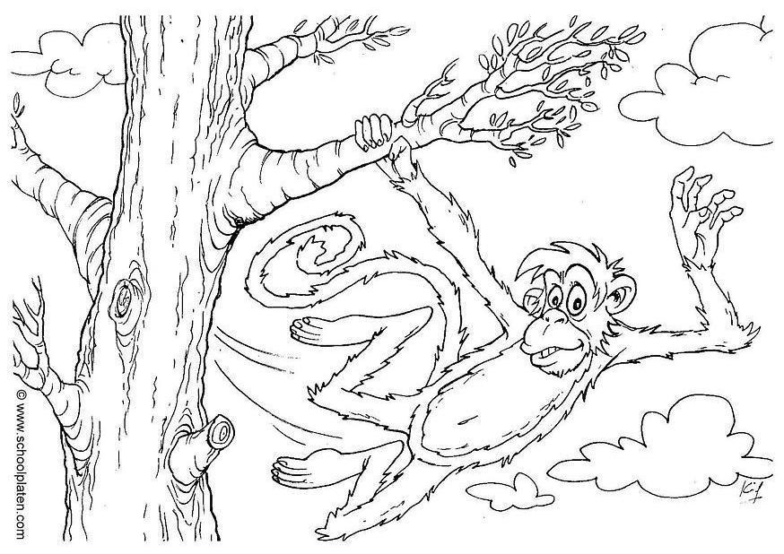 Kleurplaat Jungle Volwassenen Disegno Da Colorare Scimmia Cat 2863 Images