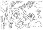 Disegno da colorare scimmia