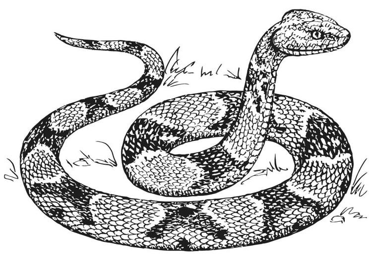 Bello Disegni D Serpente Da Colorare Migliori Pagine Da Colorare E