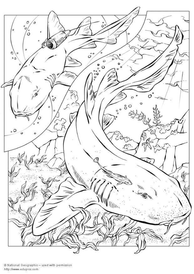 Disegno da colorare squali cat 5744 images for Disegno squalo da colorare