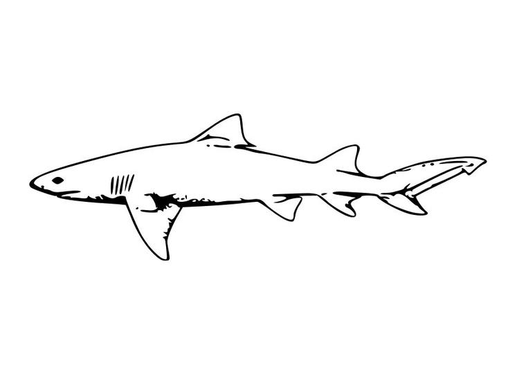 Disegno da colorare squalo cat 10228 for Disegno squalo