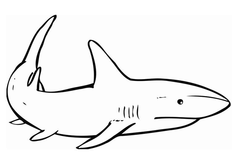 Disegno da colorare squalo cat 12837 for Disegno squalo
