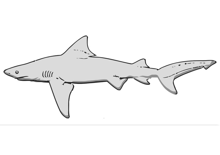 Disegno da colorare squalo cat 19472 for Disegno squalo