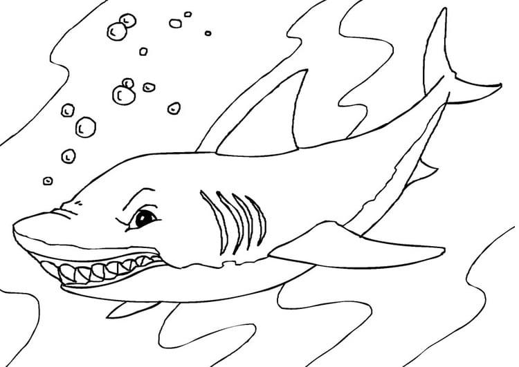 Disegno da colorare squalo cat 27232 images for Disegno squalo