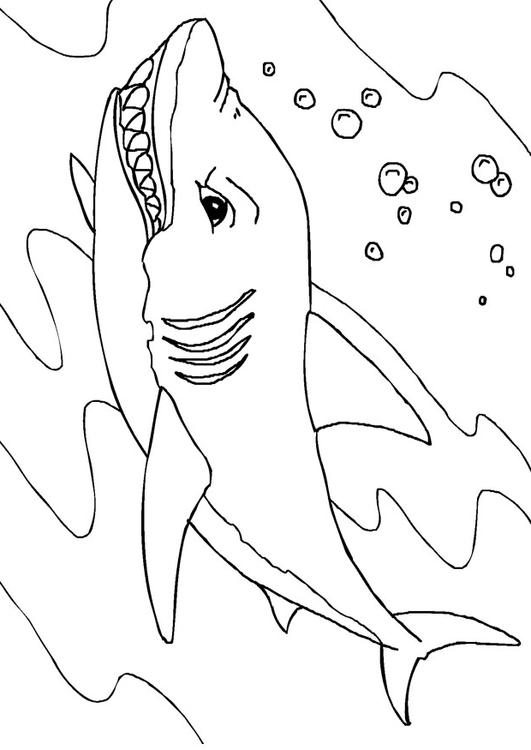 Disegno da colorare squalo cat 27232 for Disegno squalo